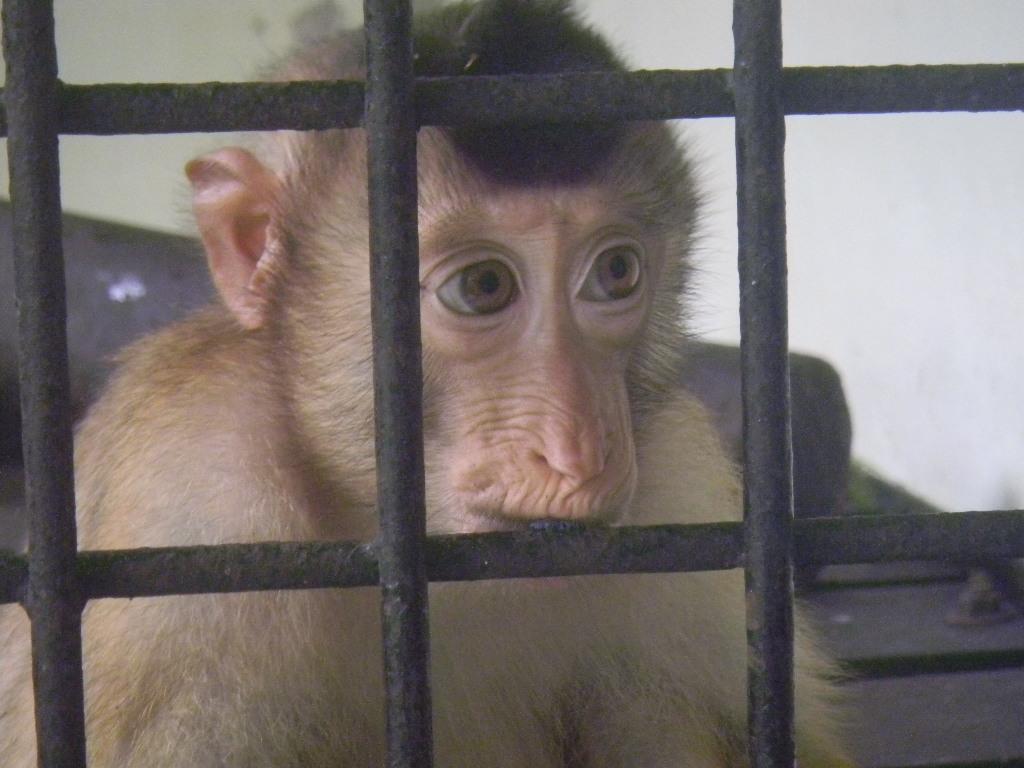 أروع صور الحيوانات في مركز الحياة البرية في ماتانج، كوتشينج