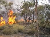 Mallee fire