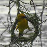 Bird_Using_Tools