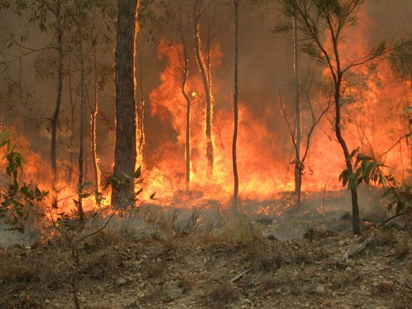 Bush fire at Captain Creek, central Queensland, AU by Wikimedia Commons