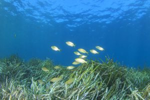 Postdoc Position: Marine Ecosystem Services | Centre for