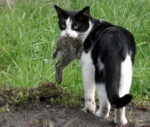 feral-cat