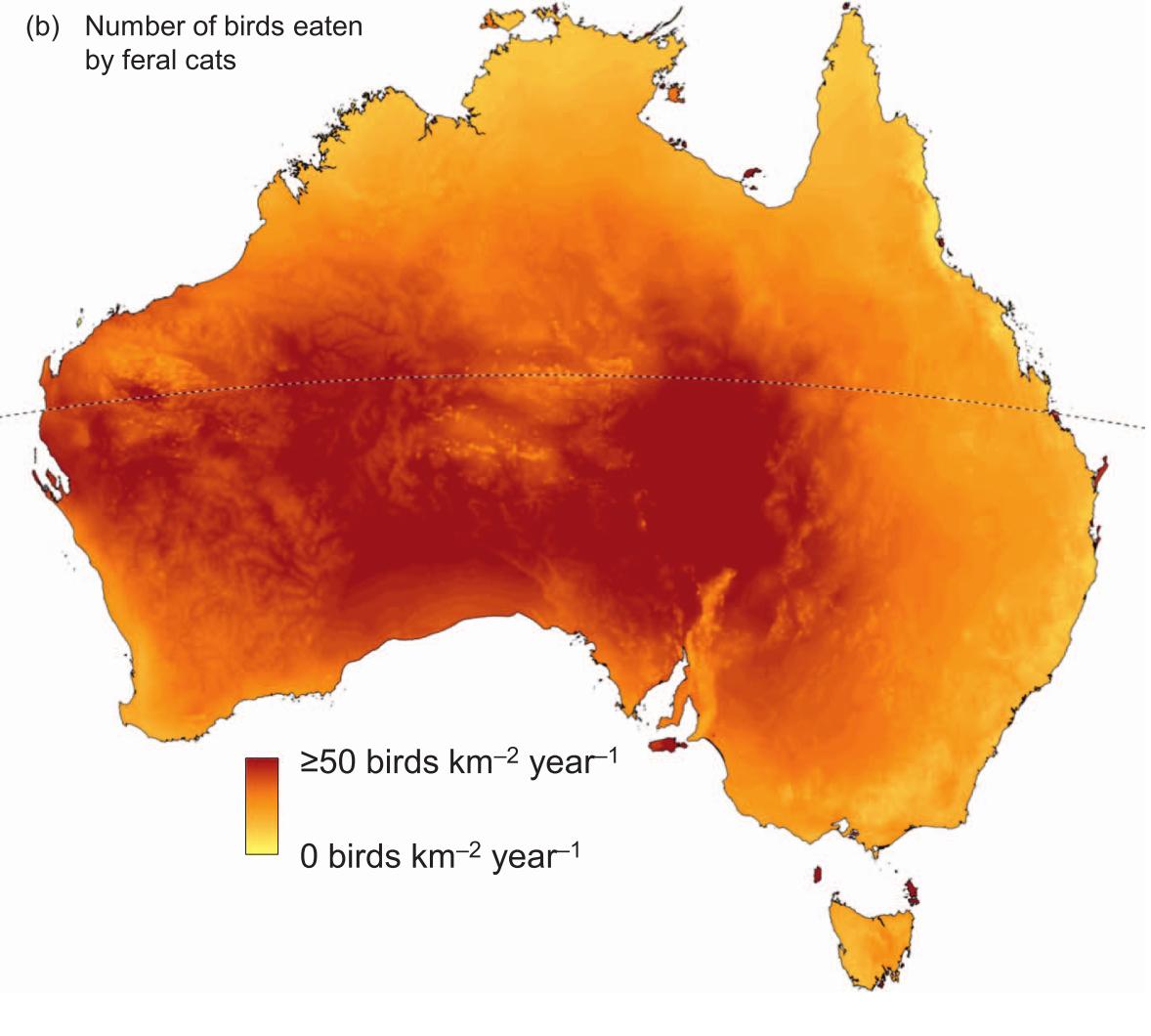 Cie spotlight how many birds are killed by cats in australia cie spotlight how many birds are killed by cats in australia gumiabroncs Choice Image