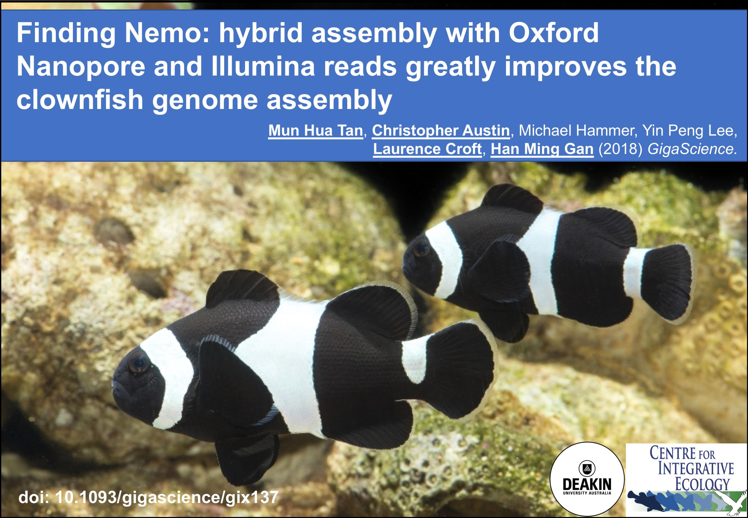cie spotlight finding nemo hybrid assembly with oxford nanopore