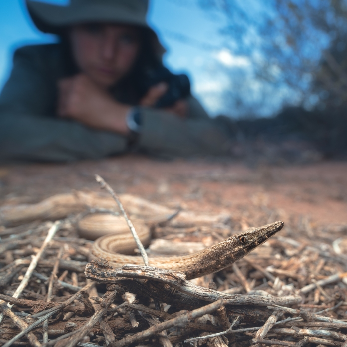 Burtons legless lizard. We watched this individual attack and try to eat our study species. (01 - Ecology in action)