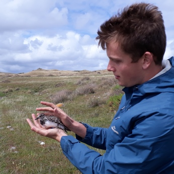 Releasing a turnstone on King Island after sampling (03 - Ecology in action)